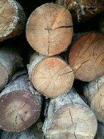 出售废旧圆木