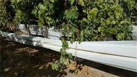 转卖HDPE 黑色软管&LLDPE白色农膜