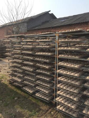 纸托厂出路1套河南蛋托生产线、1条江苏工包生产线(有图片)