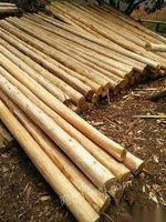 木方原木杂木杉木出售