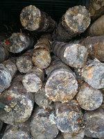 青岛出售1088吨原木