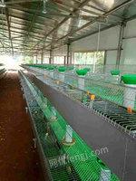二手养殖设备出售