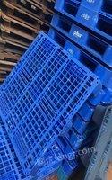 山东济南低价处理一批闲置托盘1200*1000塑料托盘1100*1100 155元