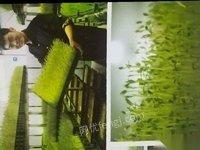 福建泉州由于家里发生意外 种植芽苗菜的全套设备。出售 30000元