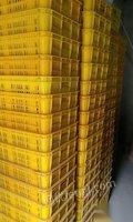 新疆烏魯木齊出售八成新食品級加厚塑料筐 尺寸一樣的.現貨70-80個.