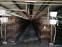 山东菏泽鸡厂升级改造,处理二手养鸡笼子