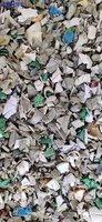 大量回收饭盒废塑料