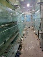 上海崇明县观赏鱼养殖场转让 大循环模式 好操作出售