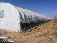 养殖厂出售二手大棚管30.80钢管 棚宽13米