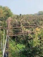 广东番禺出售废铁60吨